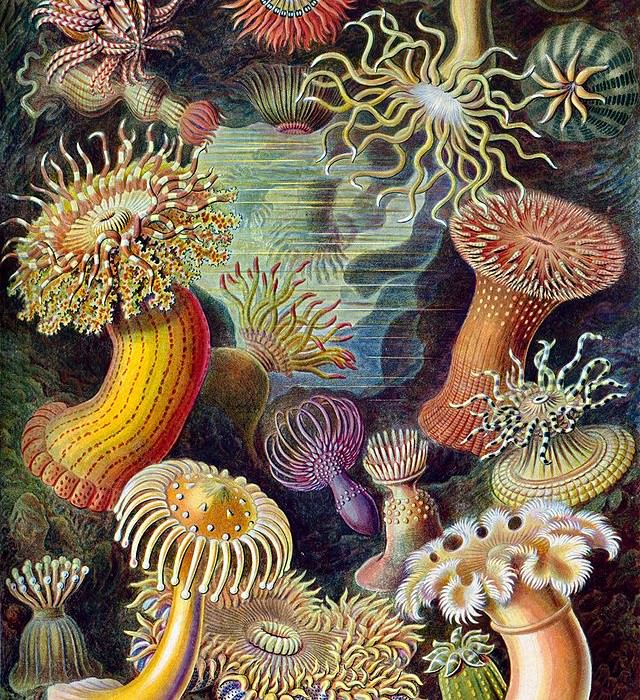 Illustrations by Ernst Haeckel that Turing was studying at the time.