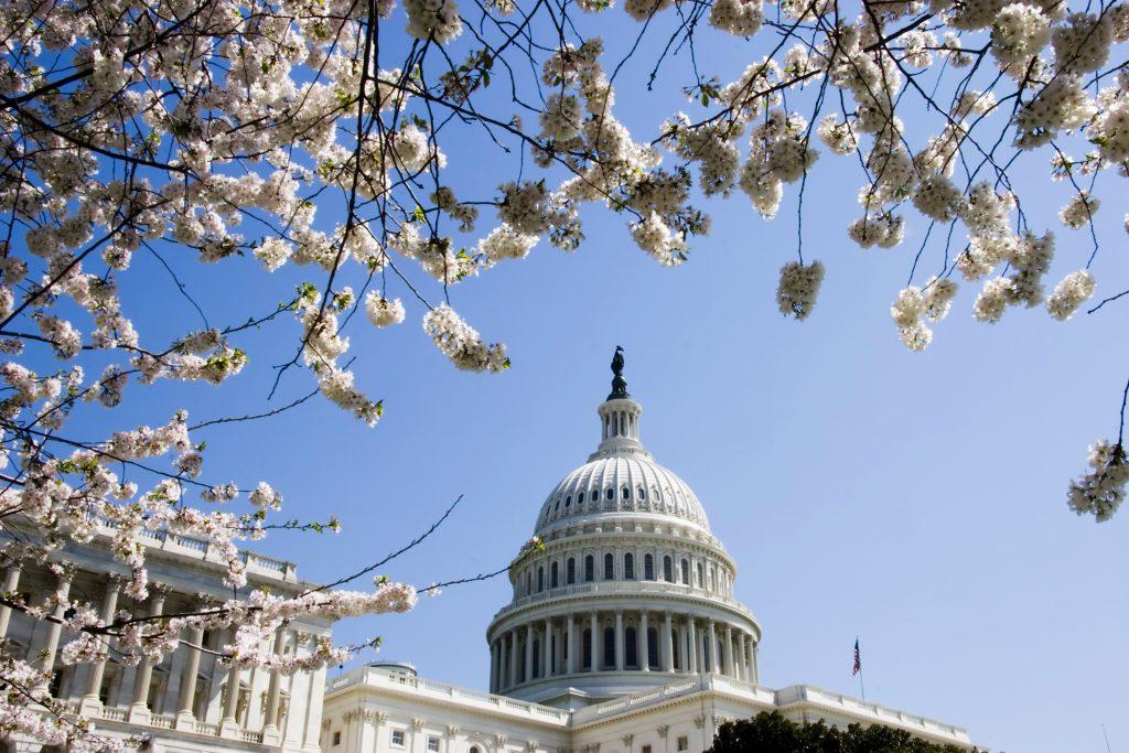 Capitol-Cherry-Blossom