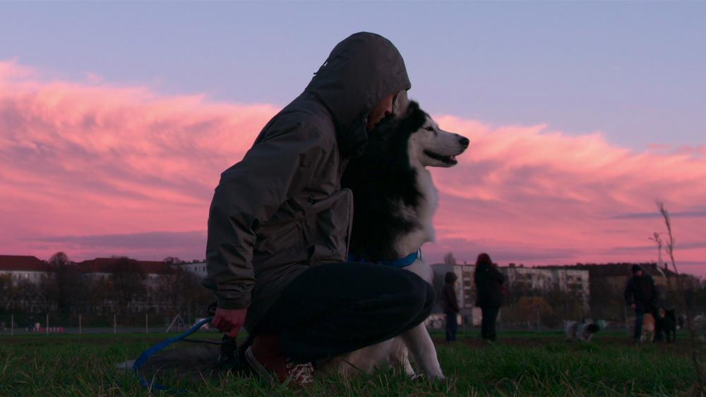 Dogs Courtesy: Netflix